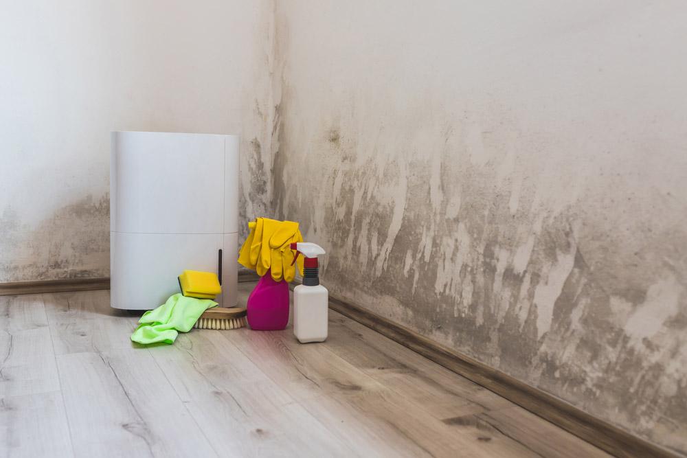 Dehumidifier to fight black mold